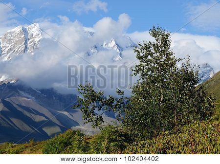 Birch Tree In Caucasus Mountains,upper Svaneti, Famous Trekking Route To Ushguli,Georgia