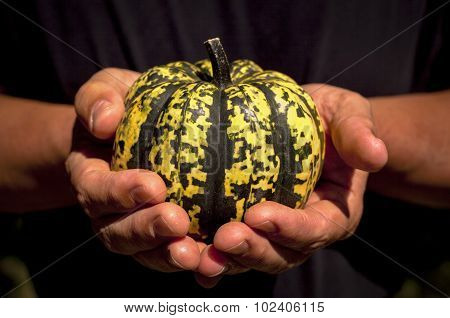 Squash being held in strong hands
