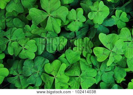 Green Natural Background