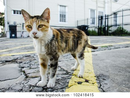 Closeup of a Stray Kitty on a Street