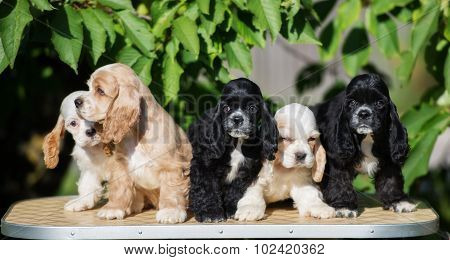 small group of adorable puppies