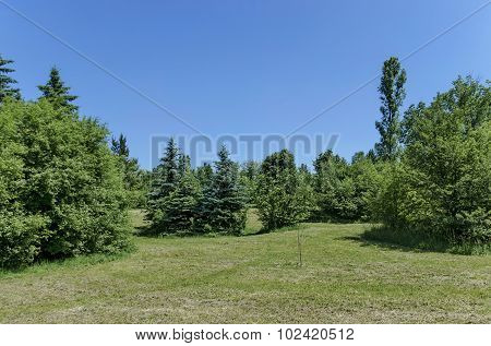 Green sunlit forest with springtime leaves covering
