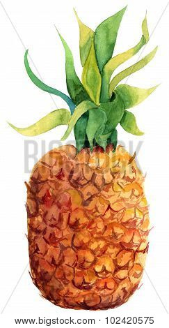 Watercolour pineapple on white background