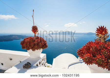 Terrace With Flowers Overlooking The Sea
