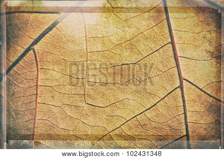 Abstract background - detail of autumn textured leaf
