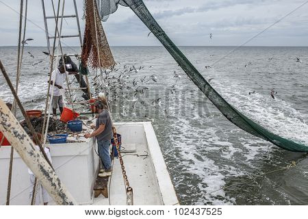 Commercial fishermen sorting catch in South Carolina