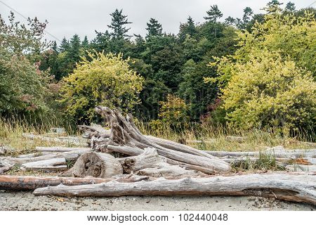 Log And Trees