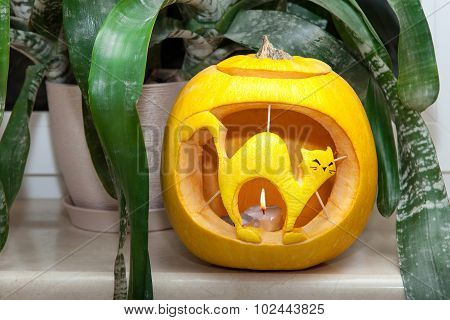 Halloween Pumpkin With Carved Cat