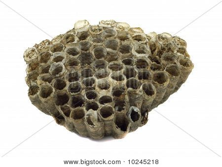 Paper Wasp Nest Isolated