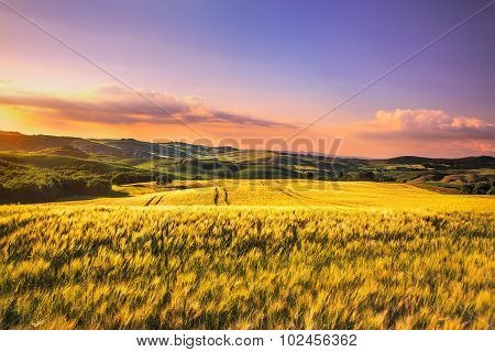 Tuscany Spring, Rolling Hills And Wheat On Sunset. Siena Rural Landscape. Italy