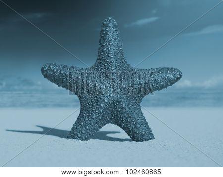 Starfish Tropical Beach Sand Summer Island Shell Concept