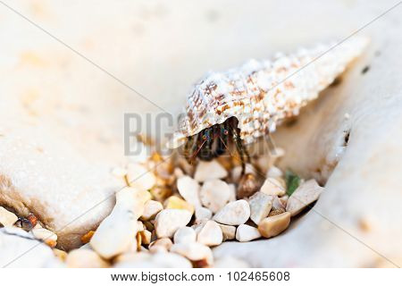 Hermit crab walking on beach