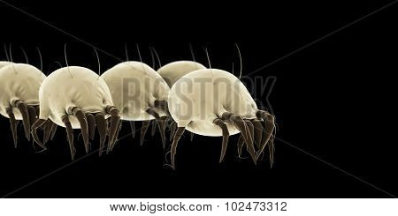 medically accurate illustration of some common dust mites