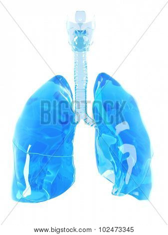 medically accurate illustration of a glass lung