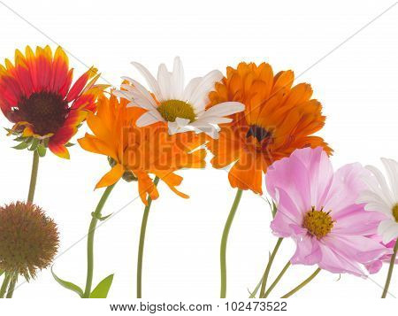 Bright Flowers On A White Background