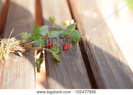 Bush with strawberries on stems. Wood background