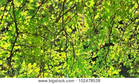Verdant Foliage