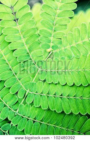 Beautiful Green Plant