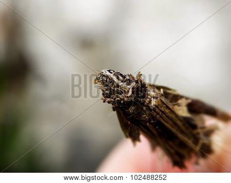 Bagworm 2