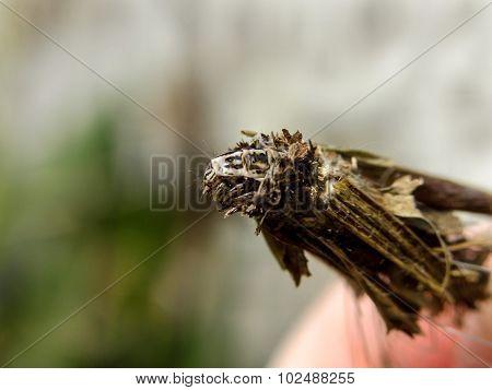 Bagworm 3
