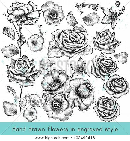 Collection Of High Detailed Vector Flowers For Design