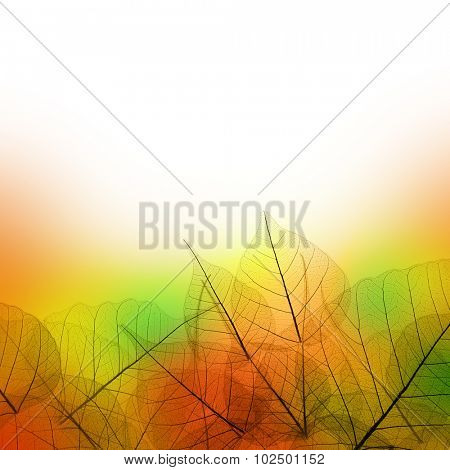 Leaves Border of Autumn season on white background - colorful design