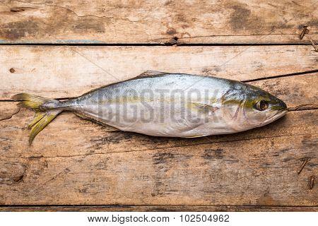 Fresh Tuna Fish On Wooden Background