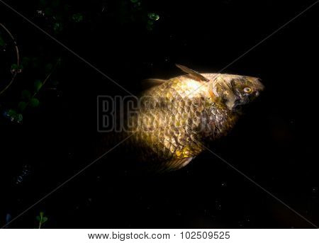 The Dead Fish on a color background.