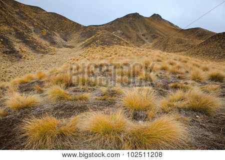 Beautiful Land Scape Of Grass Tufts  Mountain In Waitaki District South Island New Zealand