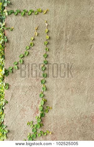 Coat Buttons Or Mexican Daisy On The Wall