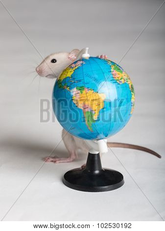 Baby Rat With A Globe