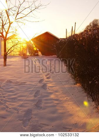 Sunshine in the winter garden.