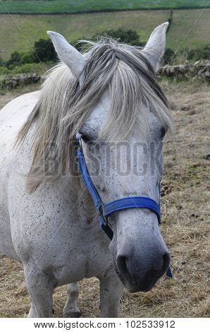 Portrait Of White Horse In Spain