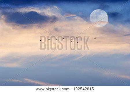 Moon Clouds Skies Birds
