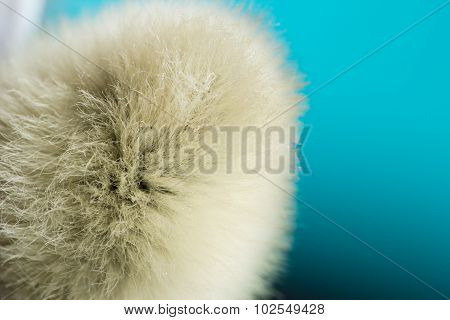 Unusual Macro Background. Pussy-willow In Super Macro Scale