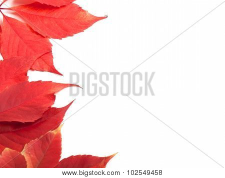 Red Autumn Leaves Background With Copy Space