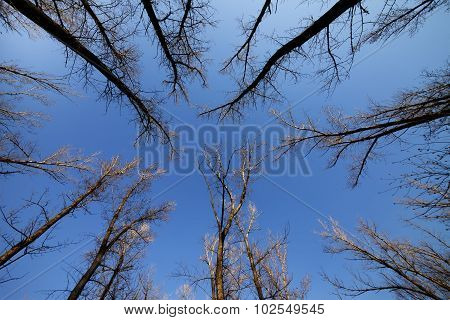 Autumn Forest And Blue Sky