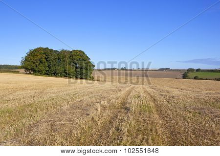 Small Copse And Wheat Field