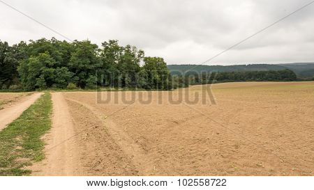 Landscape of the field after the harvest