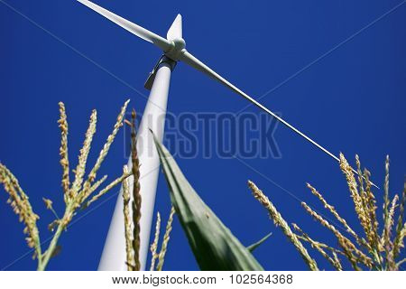 Wind Turbine Towering Over a Corn Field