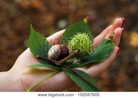 Autumn In Girl's Hand