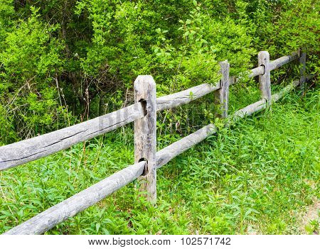 Old Rural Wood Fence In Overgrown Bushes