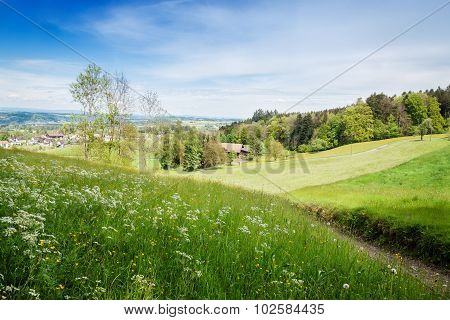 Nature Landscape Of Forest Clearing Above A Village In St. Gallen, Switzerland
