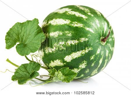 Fresh ripe watermelon with green leaves. Isolated on white background. Illustration