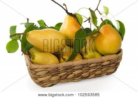 pears-juicy And Fragrant Crop Of 2015 In A Basket
