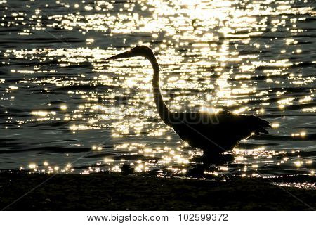 The Silhouette Of The Great Blue Heron At The Malibu Lagoon