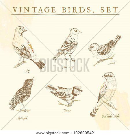Set of vintage birds. Beige and brown