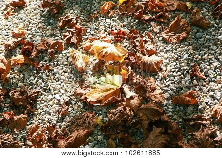 Autum Leaves On Pebble Stones