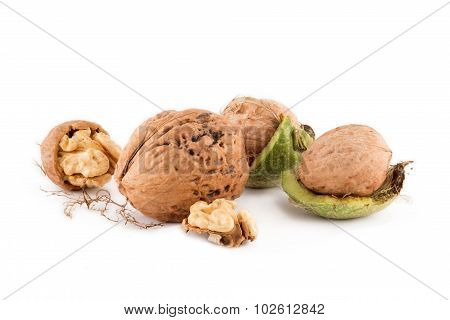 gigantic among ordinary nut kernels in-shell and green skin on white background