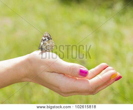 Butterfly On A Body